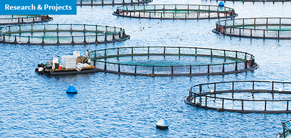 MedAID. An H2020 research project to stand up Mediterranean fish farming