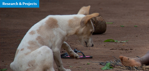 Rabies, the IZSVe supports the veterinary services of Liberia and Burkina Faso
