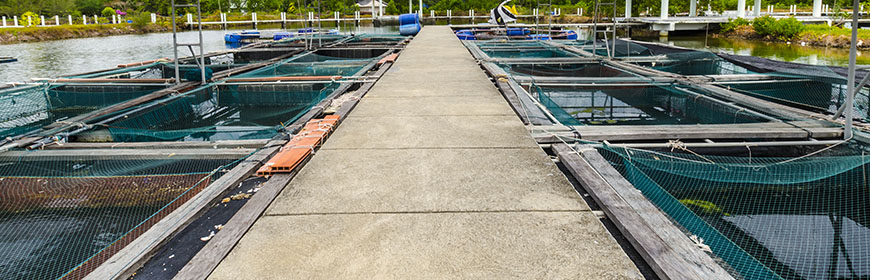 A model for risk-based surveillance in fish farms