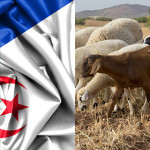 Twinning IZSVe – Algeria: support for veterinary services to enhance Algerian national productions