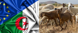 Twinning IZSVe - Algeria: support for veterinary services to enhance Algerian national productions