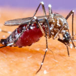 Asian tiger mosquito: how to prevent its spread [video]