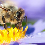The «San Michele all'Adige declaration», an appeal for biodiversity protection of native honeybee subspecies of Apis mellifera in Italy