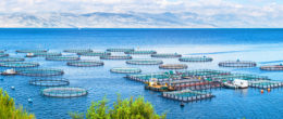 AdriAquaNet project for the strengthening and sustainability of aquaculture in the Adriatic Sea