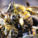 Euthanasia in beekeeping: a question of animal welfare