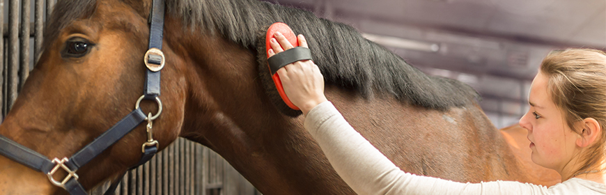 Contact with familiar people modulates horses' heart rate