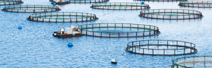 MedAID. An european Research project to stand up Mediterranean fish farming